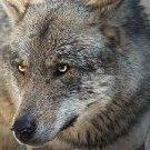 wolkodaw