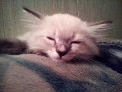спит.jpg